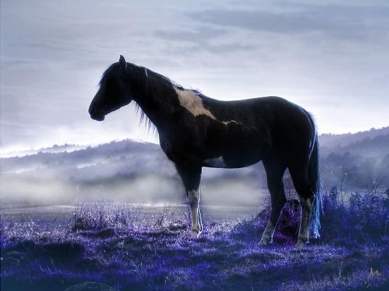 Indianhorse