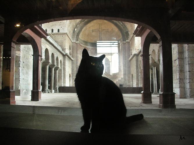 Istanbul fort-cat