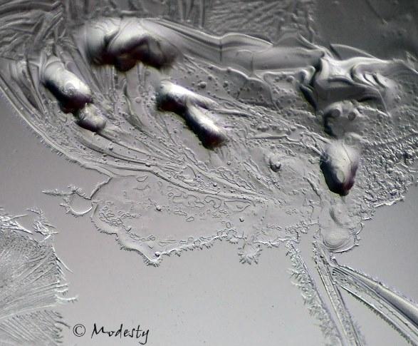Ice Fractals-IX