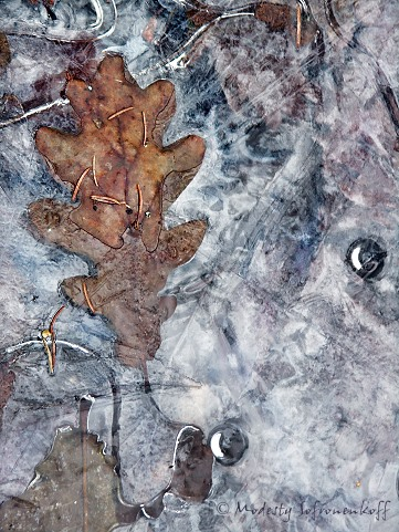 Frozen Oak